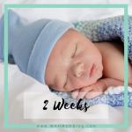 2 weeks postpartum